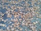 Ah quand même c'est l'automne...