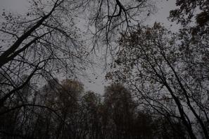 Brouillard du dimanche