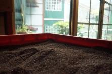 Tea factory 3